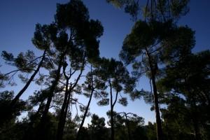 Forêt d'arbres à Banon entretenus par un élagueur