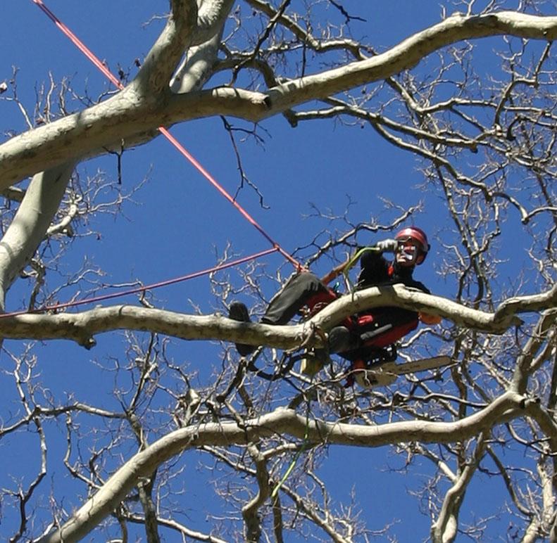 Cordic me lagage et travaux sur cordes en paca for Prix de l elagage d un arbre